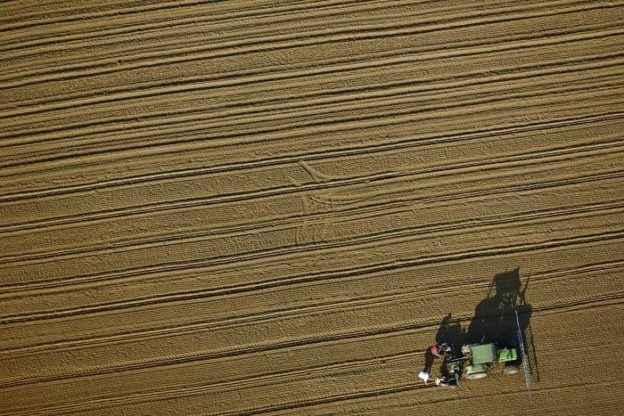 Tracktor Mit Drei Landwirtschaftlichen arbeitern Die Pflanzen einsetzen