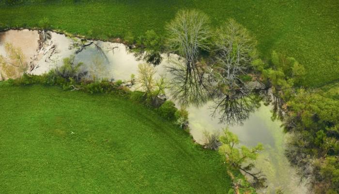 Donaubogen mit Wiesen, Büschen und Pflanzen im Wasser