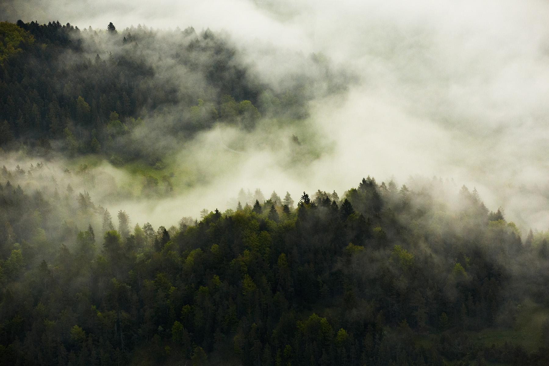 Morgennebel im Donautal